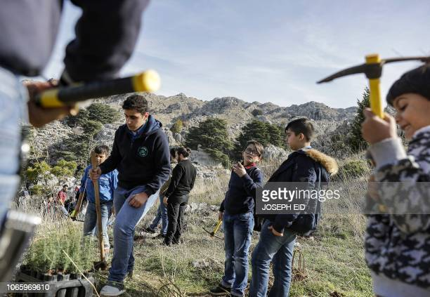 Activists from Lebanese NGO Jouzour Loubnan gather to plant young cedars on the slopes of the Jaj Cedar Reserve Forest in the Lebanon mountains...