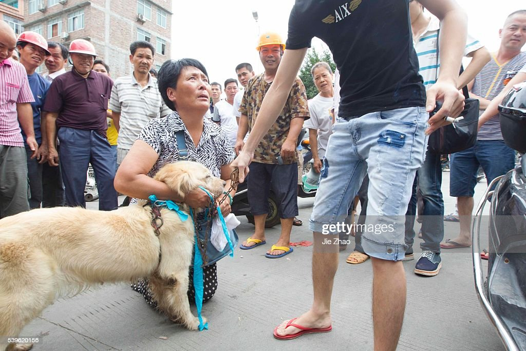 Dog Meat Festival in China : News Photo
