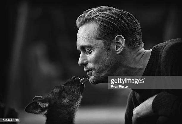 Actor Alexander Skarsgard kisses a baby Kangaroo during the Legend of Tarzan Photo Call at WILD LIFE Sydney Zoo on June 14 2016 in Sydney Australia