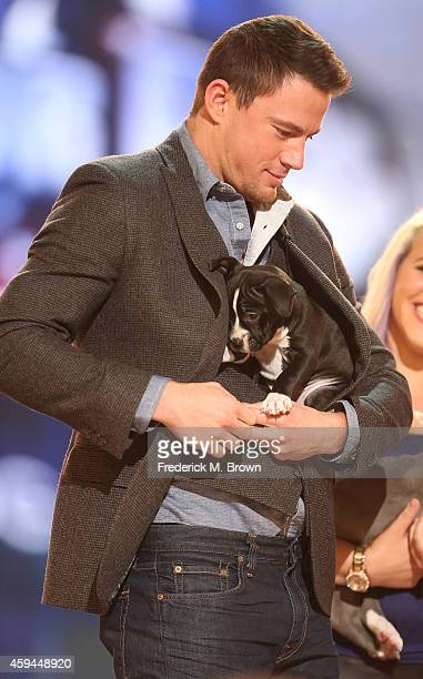 Actor Channing Tatum attends Fox's Cause For Paws All Star Dog Spectacular at Barker Hangar on November 22 2014 in Santa Monica California