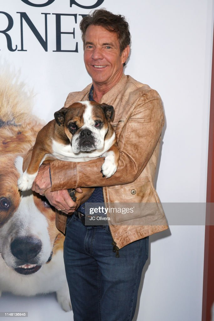 "Premiere Of Universal Pictures' ""A Dog's Journey"" - Arrivals : News Photo"