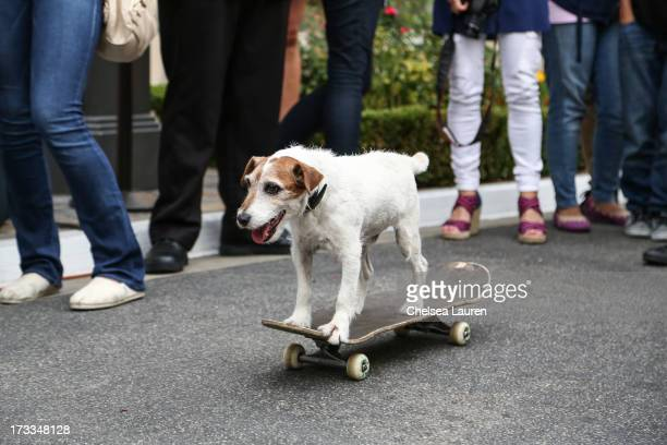 Actor dog Uggie attends Abercrombie Fitch's Stars on the Rise event at Abercrombie Fitch on July 11 2013 in Los Angeles California
