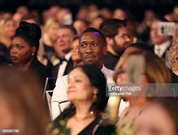 Actor Mahershala Ali during The 23rd Annual Screen Actors Guild Awards at The Shrine Auditorium on January 29 2017 in Los Angeles California 26592_012