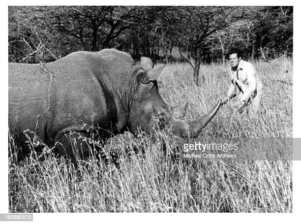 Actor Robert Culp and a rhino on the set of the movie Rhino in 1964