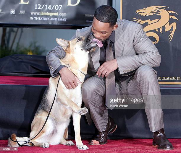 Actor Will Smith poses with Abby the dog from 'I Am Legend' as he is honored with a hand and footprint ceremony at Grauman's Chinese Theatre December...