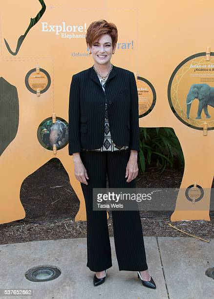 Actress and animal rescue advocate Carolyn Hennesy attends the media preview for the Beastly Ball Fundraiser at Los Angeles Zoo on June 2 2016 in Los...