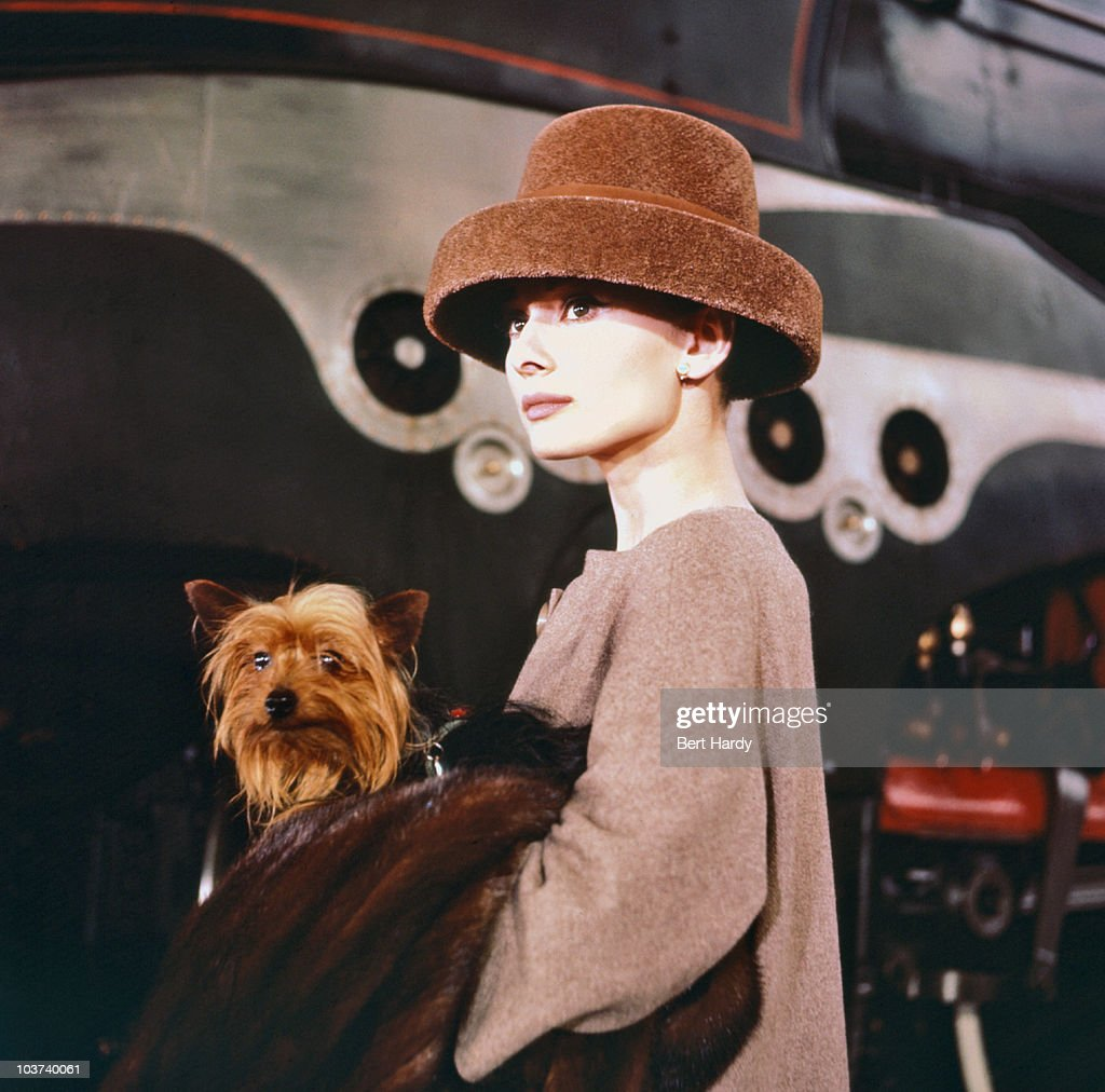Actress Audrey Hepburn (1929-1993) pictured, carrying a dog, while wearing a fur hat, on the set of 'Funny Face', 1956. Original Publication : Picture Post - 8540 - Audrey Dances With Astaire - pub. 7th July 1956
