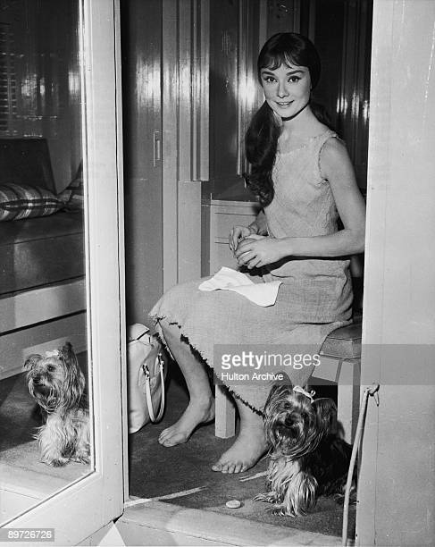 Actress Audrey Hepburn with her pet yorkshire terrier Mr Famous circa 1959
