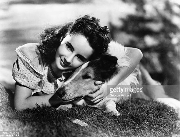 Actress Elizabeth Taylor as 'Kathie Merrick' in a scene from the 1946 movie 'The Courage of Lassie' undated photo circa 1940s