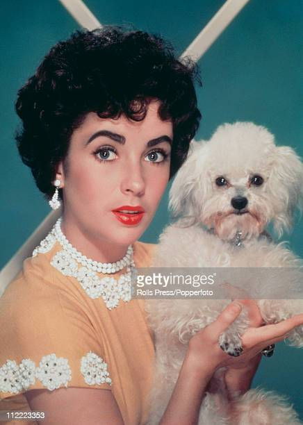 Actress Elizabeth Taylor holding a white toy poodle and loking suprised circa 1955 She is wearing a short sleeved yellow top with beaded white...