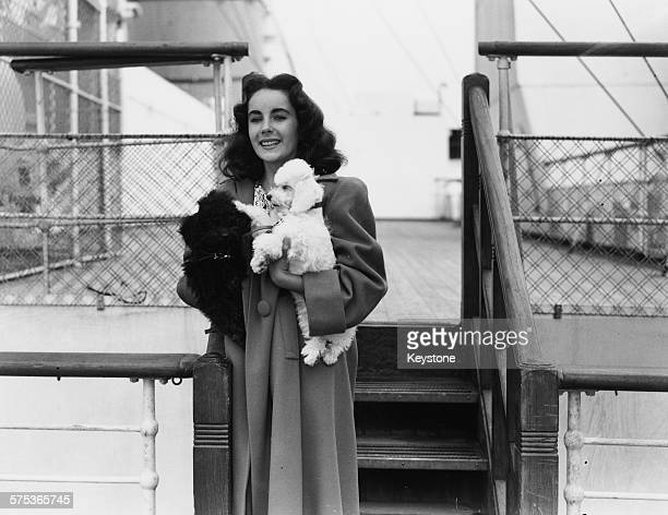 Actress Elizabeth Taylor pictured on the deck of the 'SS Queen Mary' holding her pet French Poodle 'Teeny', at Southampton, September 4th 1947.