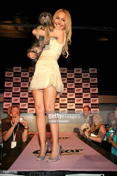 Actress Hayden Panettiere walks the runway with dog Toby at the 8th annual Paws for Style fashion show on June 11, 2007 in New York City.
