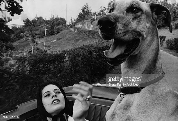 Actress Ina Balin riding in a convertible with her Great Dane named The Duchess in 1960 in Bermuda