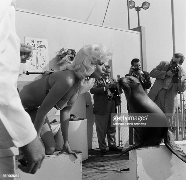 Actress Jayne Mansfield poses as she kisses a seal at Marineland in Los AngelesCalifornia