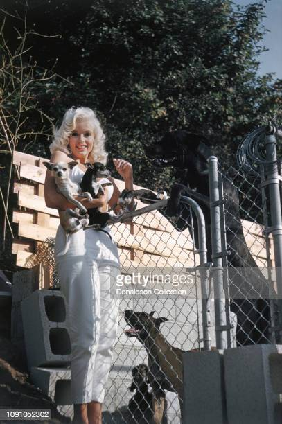 Actress Jayne Mansfield poses for a photo at home on June 24 1957 in Los Angeles California