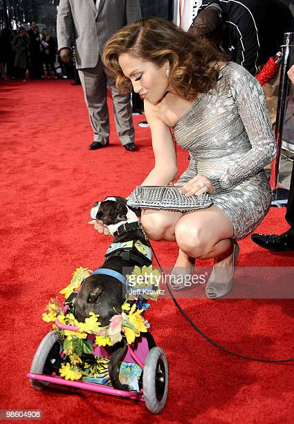 """Actress Jennifer Lopez and Nubbins arrive at the premiere of """"The Back-up Plan"""" held at Regency Village Theatre on April 21, 2010 in Westwood,..."""