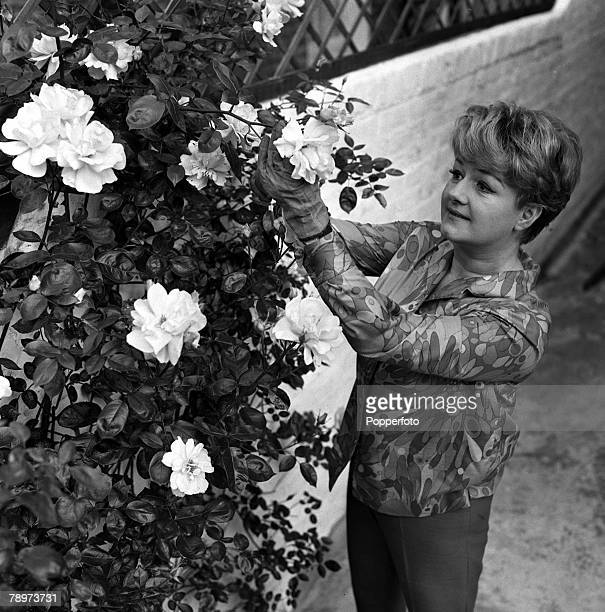 Actress Joan Sims star of the Carry On films pictured at home pruning her roses 1967