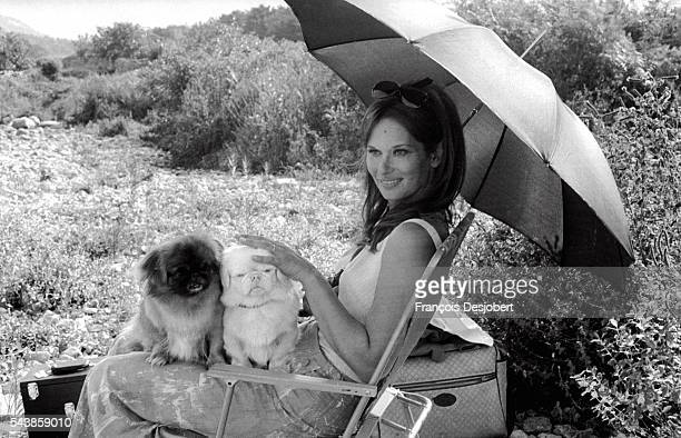 Actress Lea Massari sits in the shade of an umbrella with her two shih tzus on the set of Le Fils, in which she costars with Yves Montand.