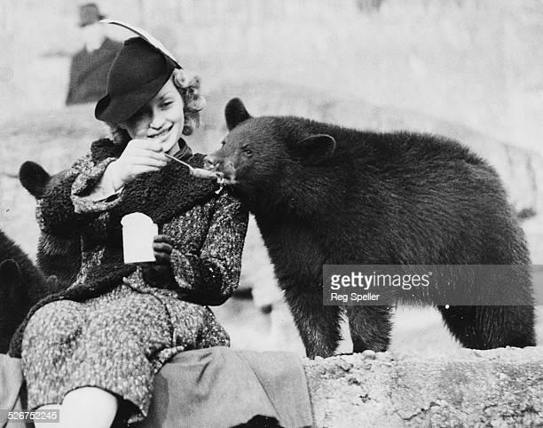 Actress Lilli Palmer feeding a young bear cub milk from a spoon London Zoo November 27th 1936