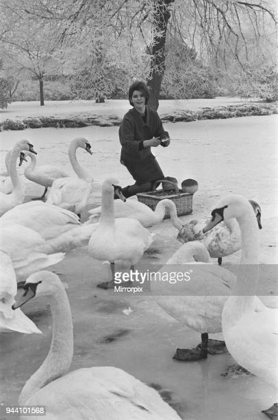 Actress Mandy Miller former child film star is pictured here feeding swans on the river Avon which was frozen over for the first time in many years...