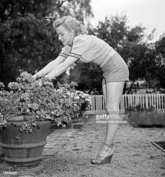 Actress Marilyn Monroe photo session at Hollywood agent Johnny Hyde's backyard on May 17 1950 in Beverly Hills California