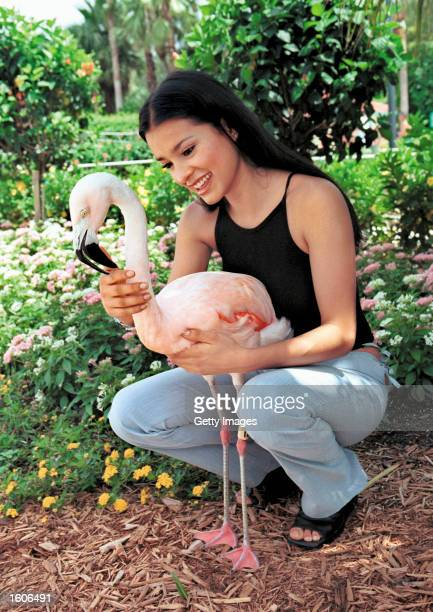 Actress Paola Rey pets a Chilean Flamingo July 8 2001 at Busch Gardens Tampa Bay''s water park in Tampa FL The actress visited the theme park to...