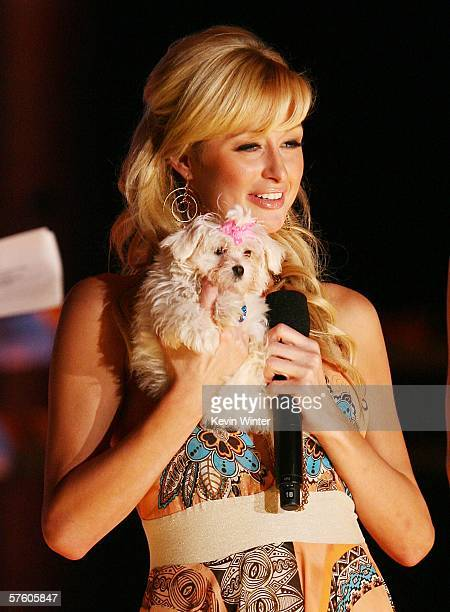 Actress Paris Hilton helps auction a puppy at the 13th Annual Race to Erase MS Disco Fever at the Century Plaza Hotel on May 12 2006 in Los Angeles...