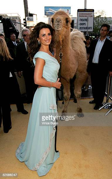 """Actress Penelope Cruz poses with a camel as she arrives at Paramount Pictures premiere of """"SAHARA"""" at the Grauman's Chinese Theater on April 4, 2005..."""