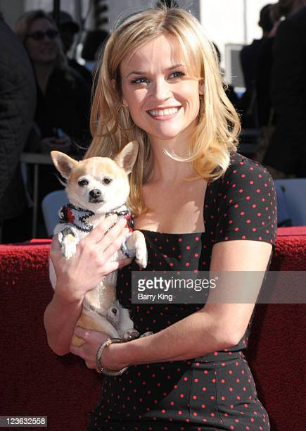 "Actress Reese Witherspoon poses with ""Legally Blonde"" co-star Bruiser at the Reese Witherspoon Hollywood Walk Of Fame Star Induction Ceremony on..."