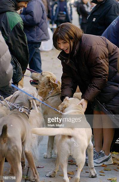 Actress Sandra Bullock takes time to pet some passing dogs before reshooting scenes for her new movie 'Two Weeks Notice' on November 18 2002 in New...