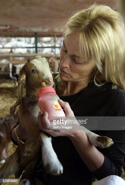 Actress Sharon Stone picks up a new born kid goat which was duly named after her during her visit March 11 2006 to the Mizpe Hayamim spa and resort...