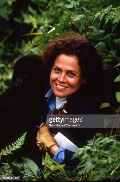 Actress Sigourney Weaver is photographed for Gorillas in the Mist in 1987 in Africa. CREDIT MUST READ: Ken Regan/Camera 5 via Contour by Getty Images.