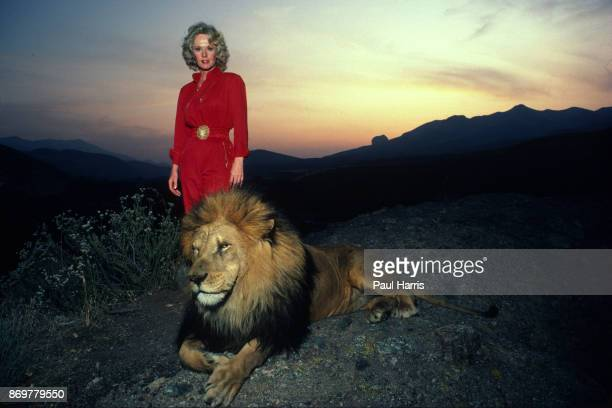 Actress Tipi Hedren mother of Melanie Griffiths stands on a hill overlooking her Saugus Animal reserve with a full grown male lion November 16 1983...