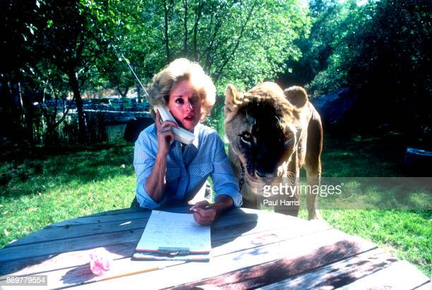 Actress Tipi Hedren mother of Melanie Griffiths talks on a cell phone at her Saugus Animal reserve with a full grown female lion November 16 1983 at...