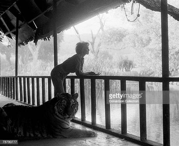 Actress Tippi Hedren poses with a tiger during a photo shoot held in 1991 at her Shambala Preserve a refuge for big cats in Acton Northern California