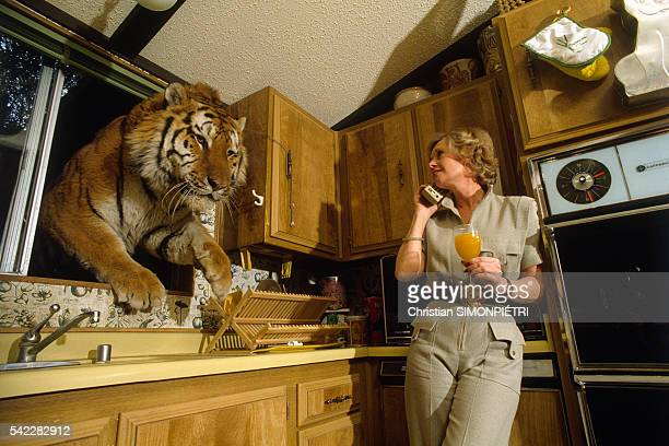 Actress Tippi Hedren watches a tiger jump through the kitchen window of her home on the Shambala Preserve she founded and manages
