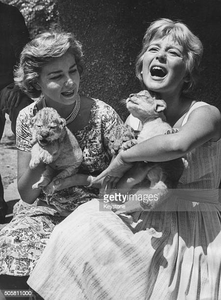 Actresses Lorella De Luca and Alessandra Panaro playing with two week old lion cubs in Rome July 23rd 1958