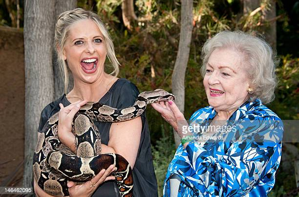 Actresses Sarah Michelle Gellar and Betty White pose with Jacob a Columbian Red Tail Boa Constrictor at the Greater Los Angeles Zoo Association's...