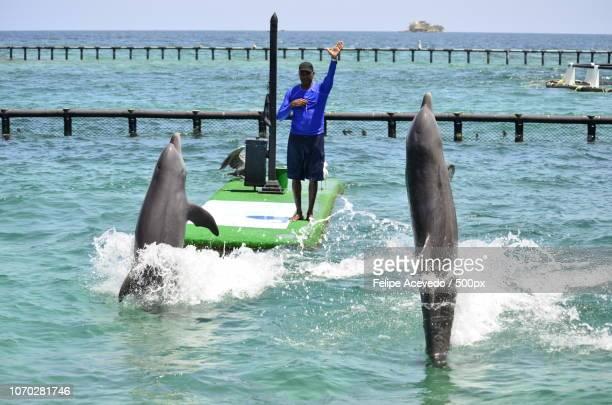 Acuario Islas del Rosario Colombia Cartagena