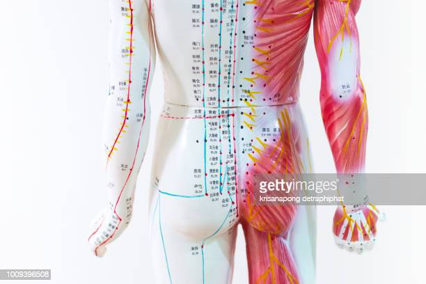 Acupuncture, body, back, Chinese