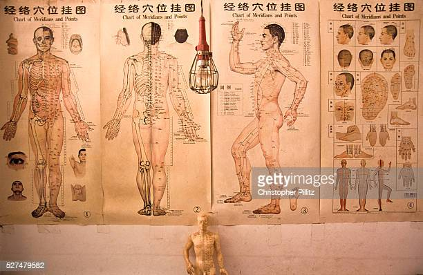 Acupuncture charts in a Chinese medical herbalists clinic Xiao Meng Yang town Yunnan China