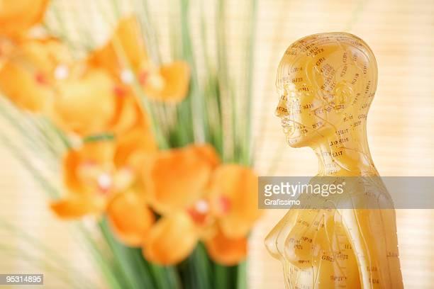 Akupunktur weibliche model