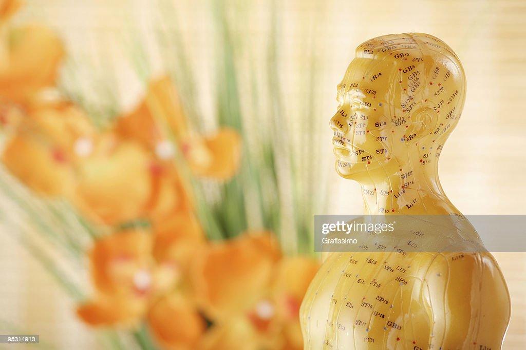 Acupuncture male model torso : Stock Photo