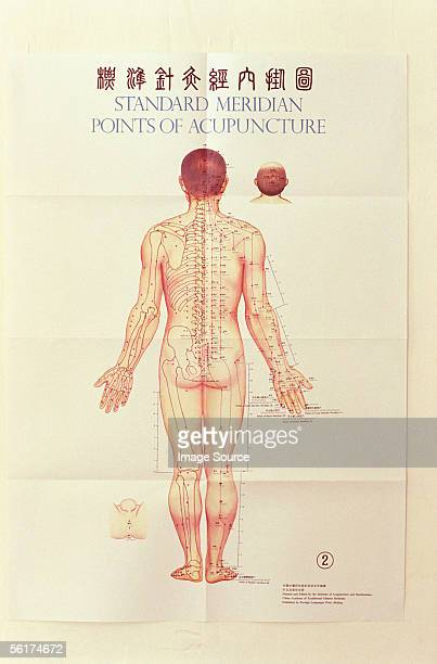 Acupuncture Chart Stock Photos And Pictures