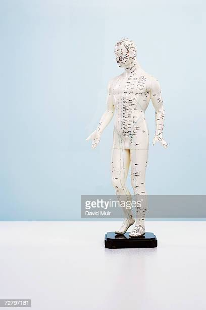 Acupuncture model in studio, white background