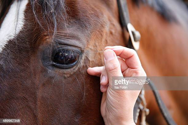 Acupuncture of a horse on May 11 2015 in Munich Germany