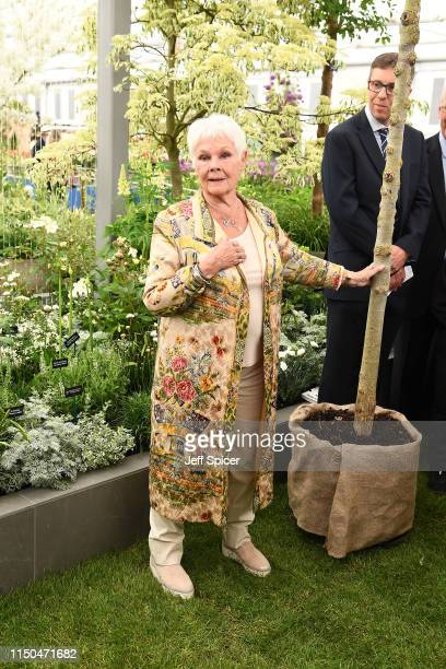 Adam Dunnett Director at Hillier Trees presents a Dutch Elm Disease disease resistant Elm tree sapling to Dame Judi Dench to launch the reelming of...