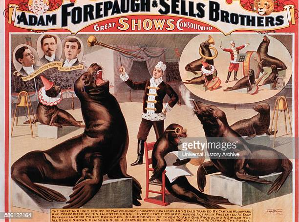 Adam Forepaugh and Sells Brothers Great Shows Consolidated The Great and Only Troupe of Marvelously Educated Sea Lions and Seals Circus Poster circa...