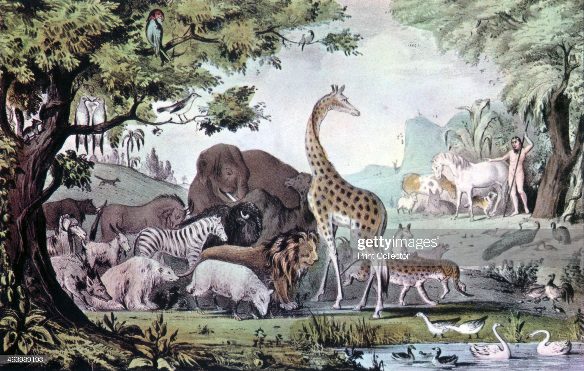 'Adam Naming the Creatures', 1847.Artist: Nathaniel Currier : News Photo