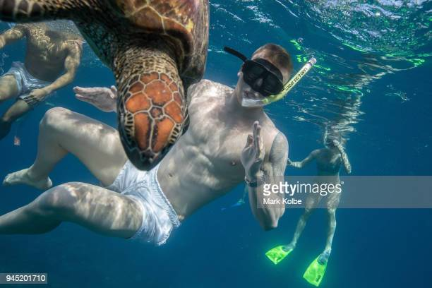 Adam Peaty of England swims with a green turtle during an athletes Great Barrier Reef experience as part of day eight of the Gold Coast 2018...